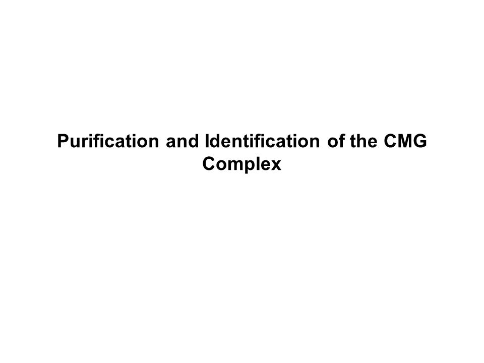 Purification and Identification of the CMG Complex