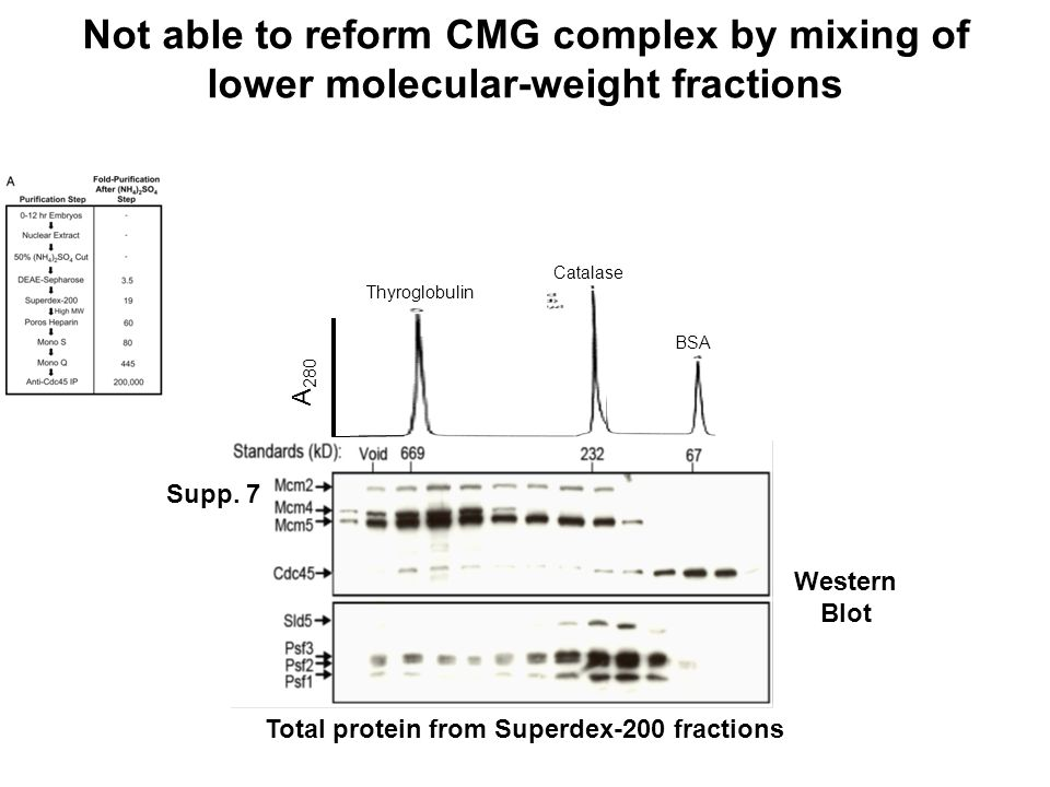 Not able to reform CMG complex by mixing of lower molecular-weight fractions Supp.