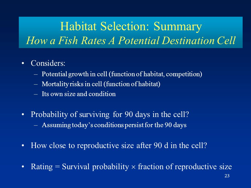 23 Habitat Selection: Summary How a Fish Rates A Potential Destination Cell Considers: –Potential growth in cell (function of habitat, competition) –Mortality risks in cell (function of habitat) –Its own size and condition Probability of surviving for 90 days in the cell.