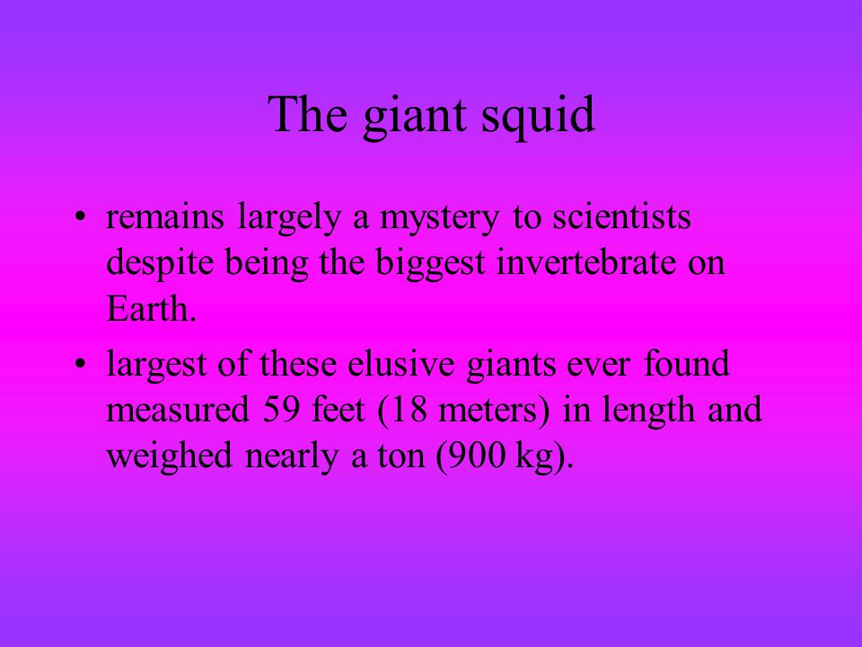 The giant squid remains largely a mystery to scientists despite being the biggest invertebrate on Earth. largest of these elusive giants ever found me