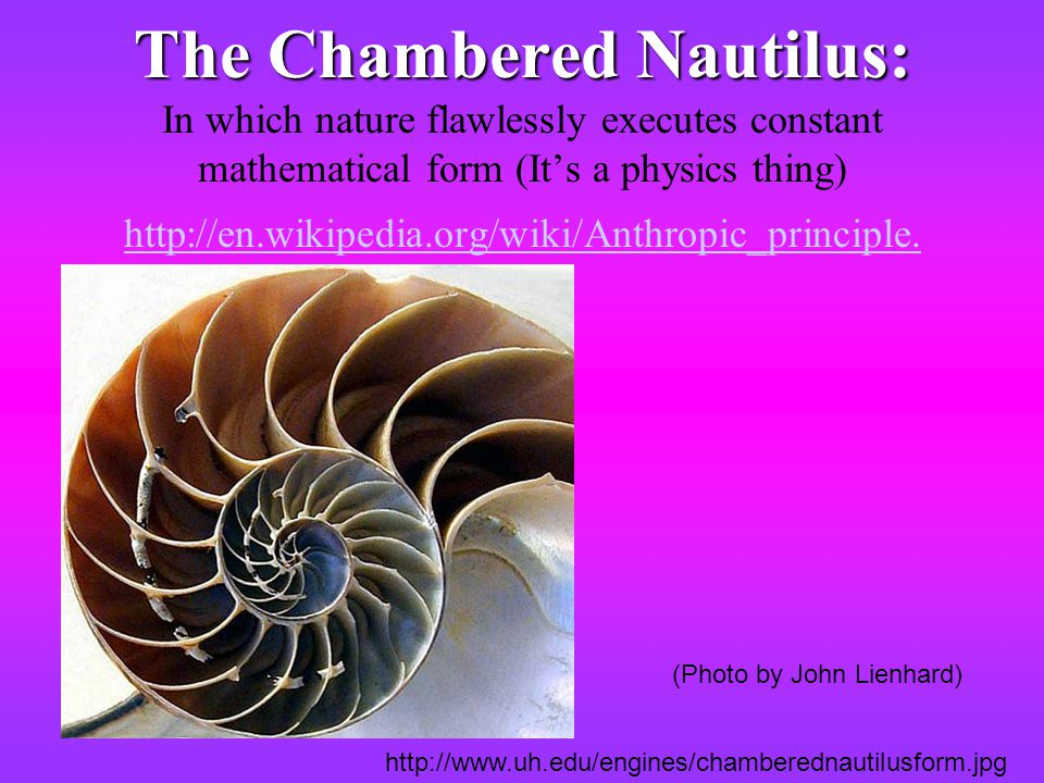 The Chambered Nautilus: The Chambered Nautilus: In which nature flawlessly executes constant mathematical form (Its a physics thing) http://en.wikiped