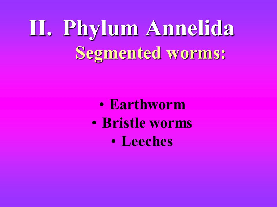 II.Phylum Annelida Segmented worms: Earthworm Bristle worms Leeches