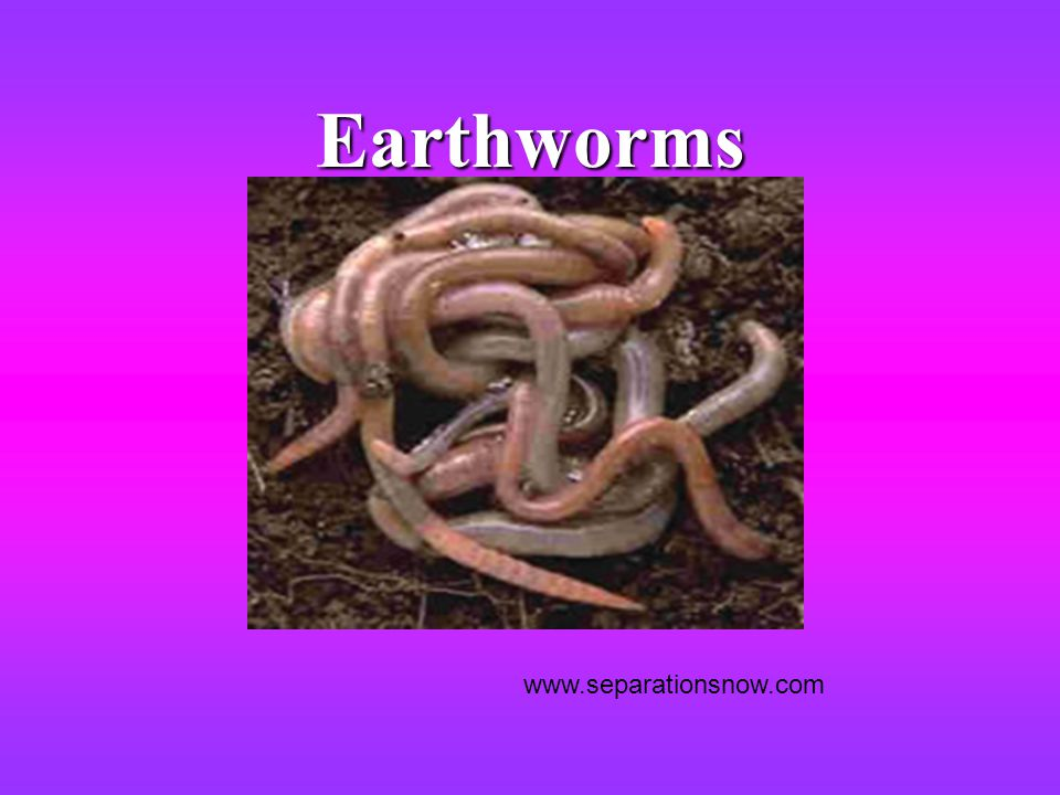 Earthworms www.separationsnow.com