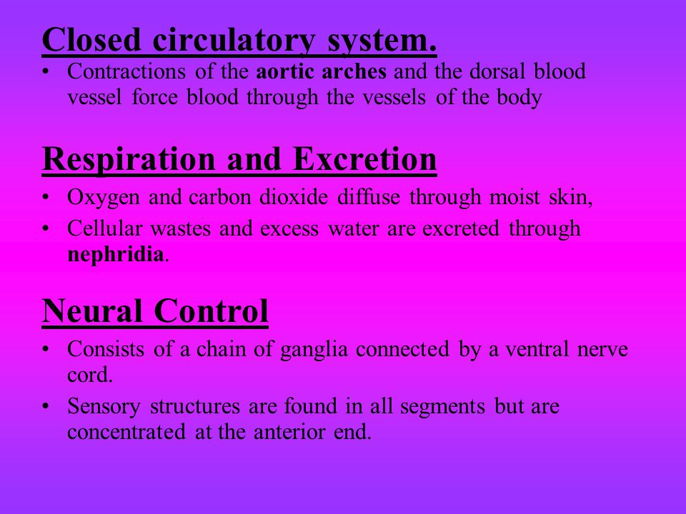 Closed circulatory system. Contractions of the aortic arches and the dorsal blood vessel force blood through the vessels of the body Respiration and E