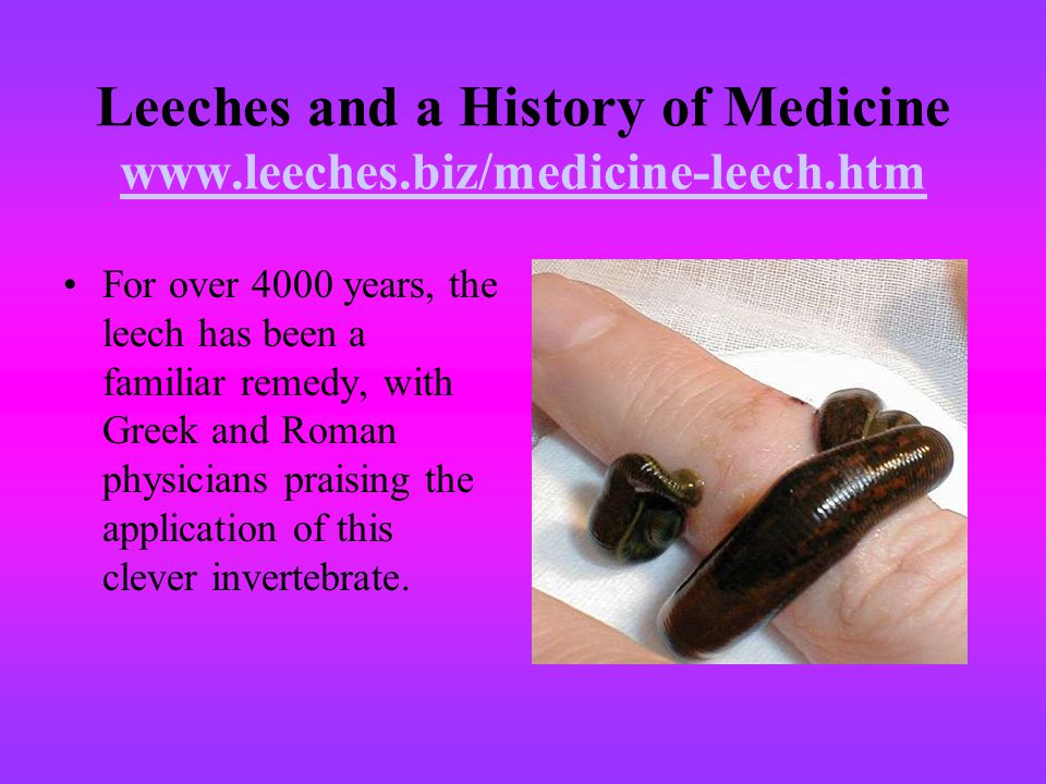 Leeches and a History of Medicine www.leeches.biz/medicine-leech.htm www.leeches.biz/medicine-leech.htm For over 4000 years, the leech has been a fami