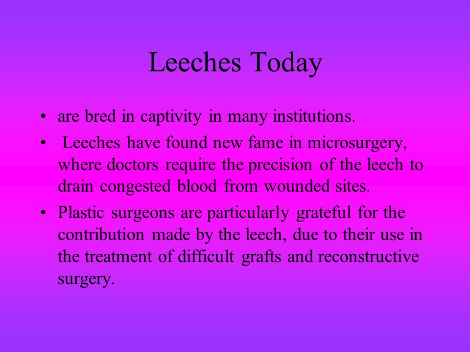 Leeches Today are bred in captivity in many institutions. Leeches have found new fame in microsurgery, where doctors require the precision of the leec