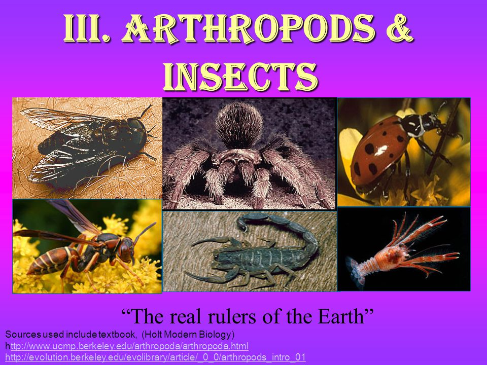 III. Arthropods & Insects The real rulers of the Earth Sources used include textbook, (Holt Modern Biology) http://www.ucmp.berkeley.edu/arthropoda/ar