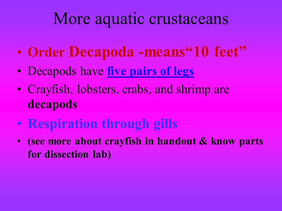 More aquatic crustaceans Order Decapoda -means10 feet Decapods have five pairs of legs Crayfish, lobsters, crabs, and shrimp are decapods Respiration