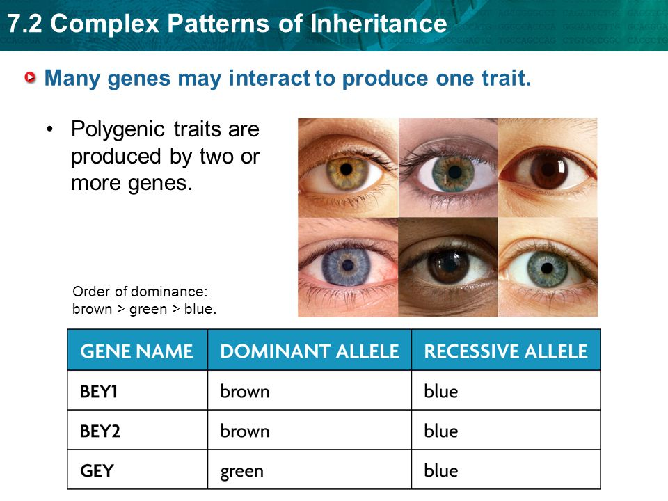 7.2 Complex Patterns of Inheritance Many genes may interact to produce one trait.