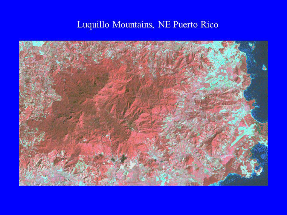 Luquillo Mountains, NE Puerto Rico