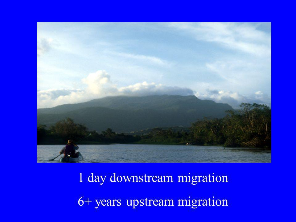 1 day downstream migration 6+ years upstream migration