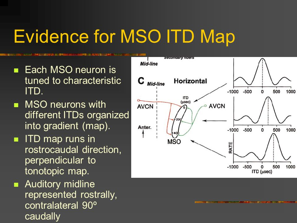 Evidence for MSO ITD Map Each MSO neuron is tuned to characteristic ITD.