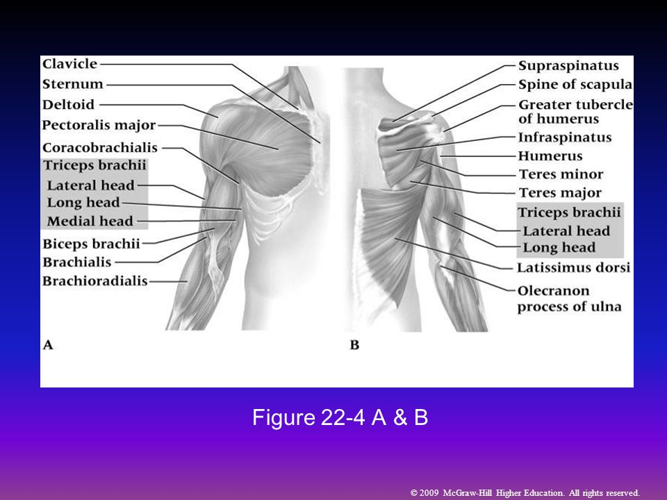© 2009 McGraw-Hill Higher Education. All rights reserved. Figure 22-4 A & B