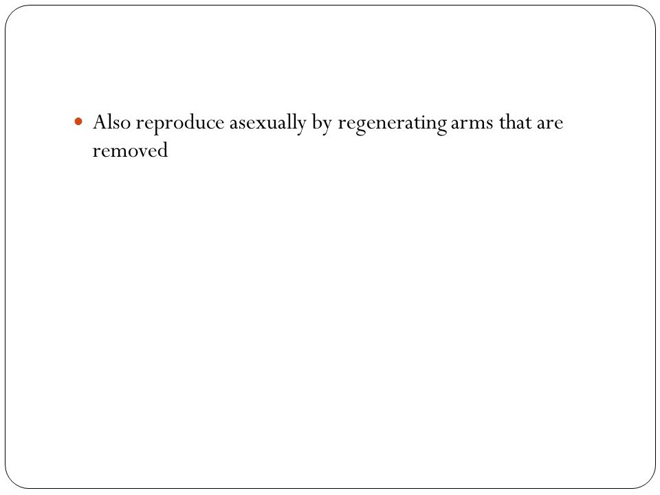 Also reproduce asexually by regenerating arms that are removed