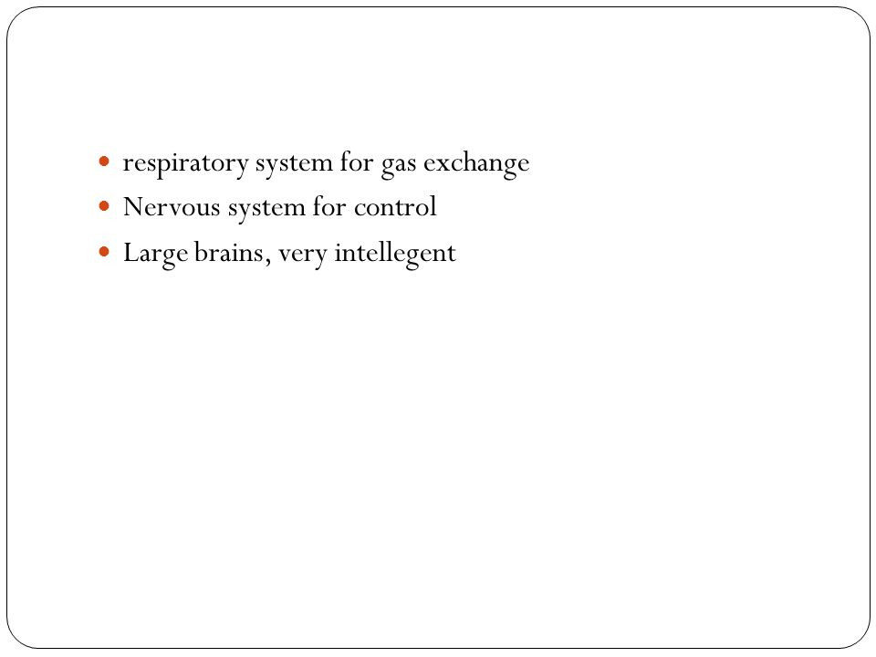 respiratory system for gas exchange Nervous system for control Large brains, very intellegent