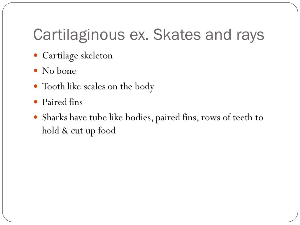 Cartilaginous ex. Skates and rays Cartilage skeleton No bone Tooth like scales on the body Paired fins Sharks have tube like bodies, paired fins, rows