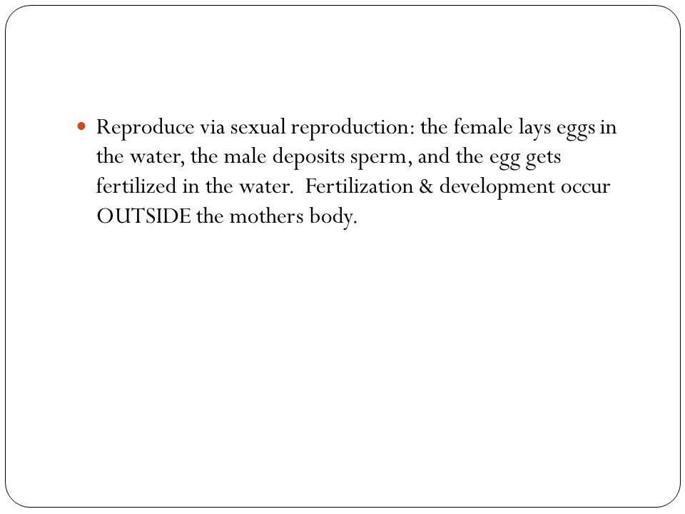 Reproduce via sexual reproduction: the female lays eggs in the water, the male deposits sperm, and the egg gets fertilized in the water. Fertilization