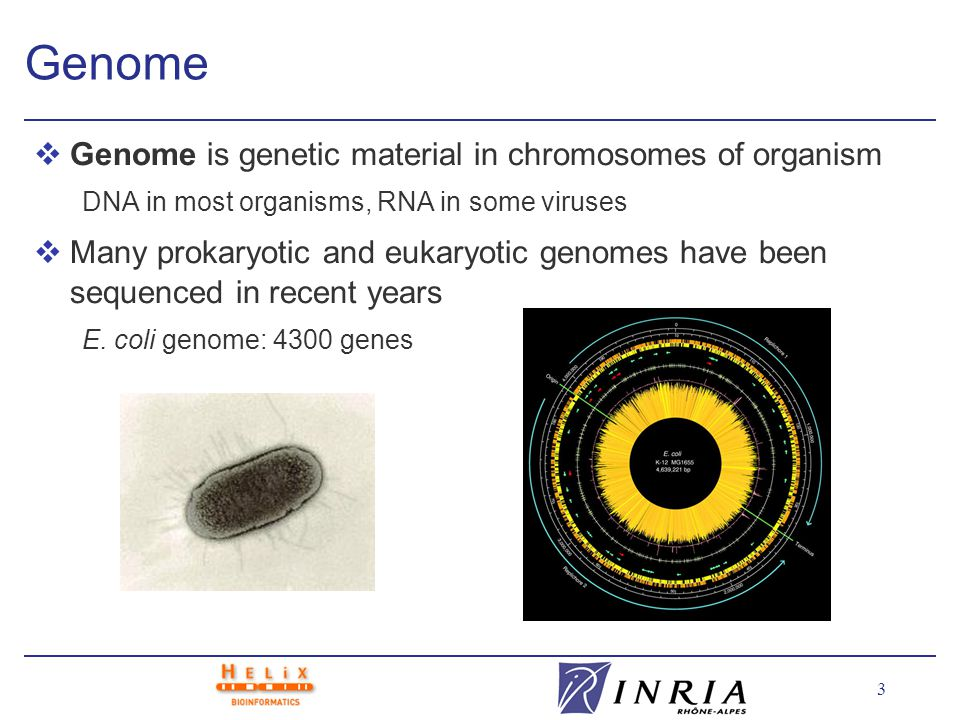 3 Genome vGenome is genetic material in chromosomes of organism DNA in most organisms, RNA in some viruses vMany prokaryotic and eukaryotic genomes have been sequenced in recent years E.