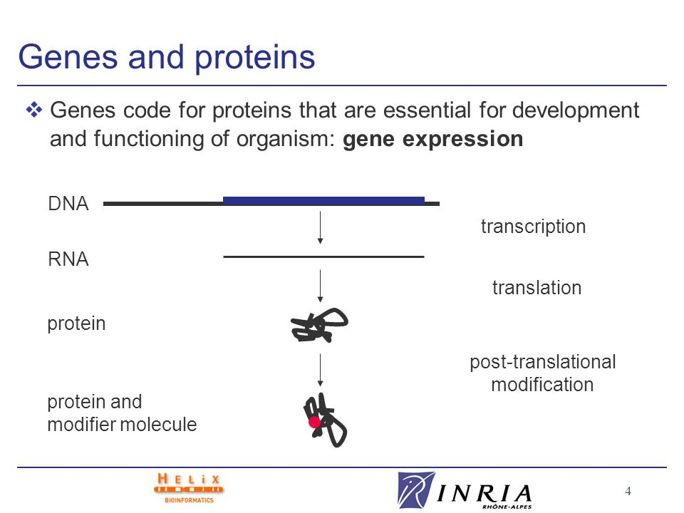 5 vCellular processes involve interactions between proteins, genes, metabolites, and other molecules: l cell structure l metabolism l gene regulation l signal transduction Molecular interactions membrane metabolite enzyme gene transcription factor phosphorylated regulatory protein kinase