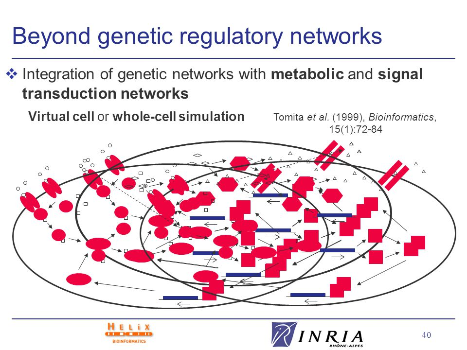 40 Beyond genetic regulatory networks vIntegration of genetic networks with metabolic and signal transduction networks Virtual cell or whole-cell simulation Tomita et al.