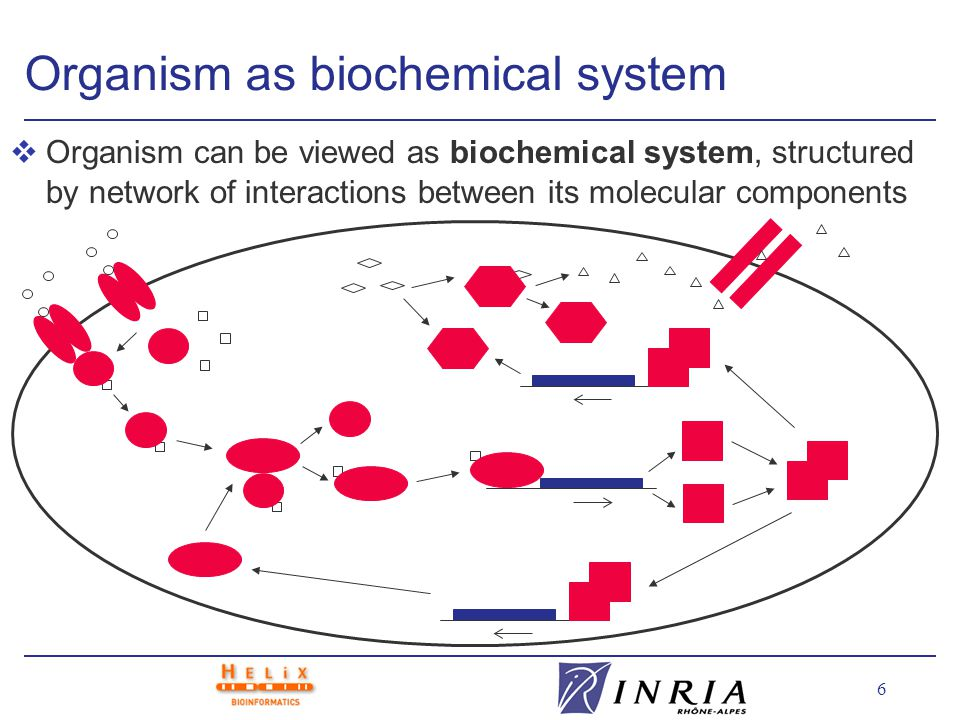 6 Organism as biochemical system vOrganism can be viewed as biochemical system, structured by network of interactions between its molecular components