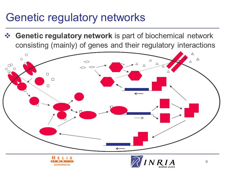 10 Experimental tools vStudy of large and complex genetic regulatory networks requires powerful experimental tools High-throughput, low-cost, reliable, precise vInformation obtained from experimental tools in genomics: l DNA sequence (genes) of organism l interactions between proteins and DNA (microarrays) l temporal variation of gene products (microarrays, mass spectometry)