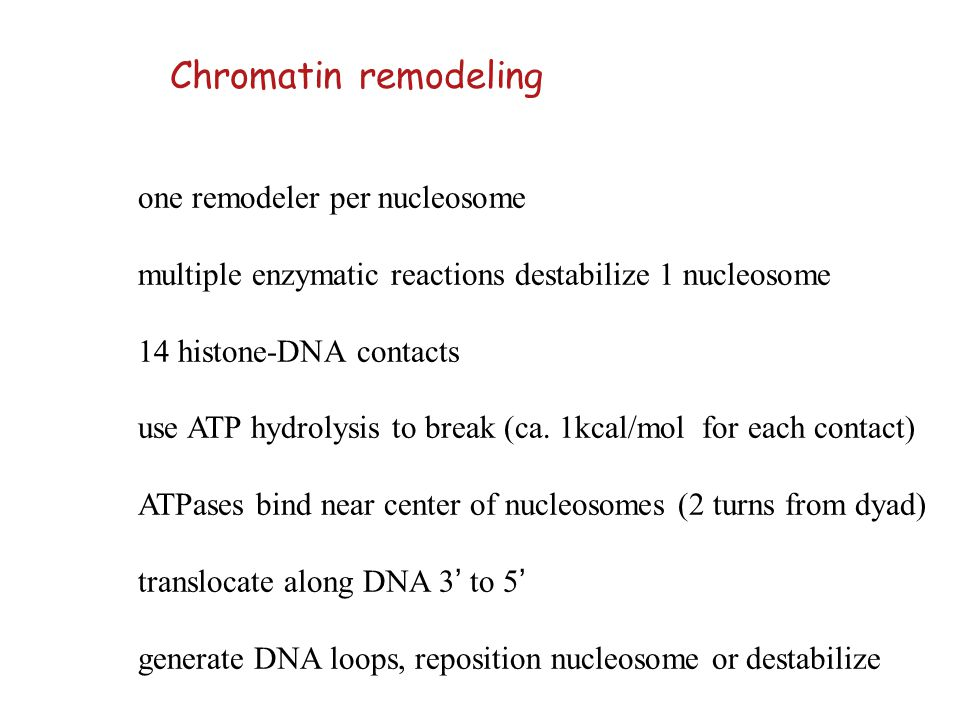 one remodeler per nucleosome multiple enzymatic reactions destabilize 1 nucleosome 14 histone-DNA contacts use ATP hydrolysis to break (ca. 1kcal/mol