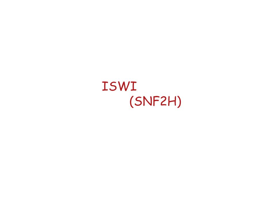 ISWI (SNF2H)