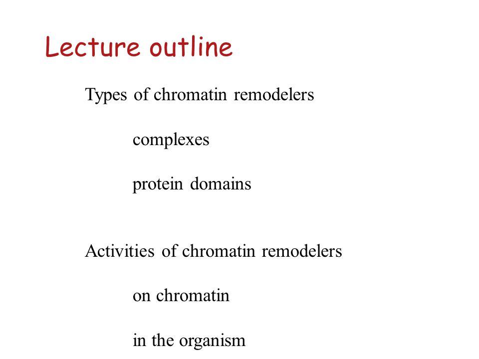 Chromatin remodeling ATPases txn repression txn assembly DNA methylation exchange repair DNA methylation heterochromation recombinationarcheal TBP
