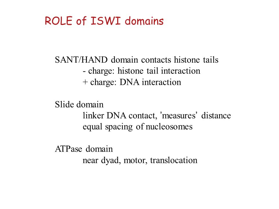SANT/HAND domain contacts histone tails - charge: histone tail interaction + charge: DNA interaction Slide domain linker DNA contact, measures distanc