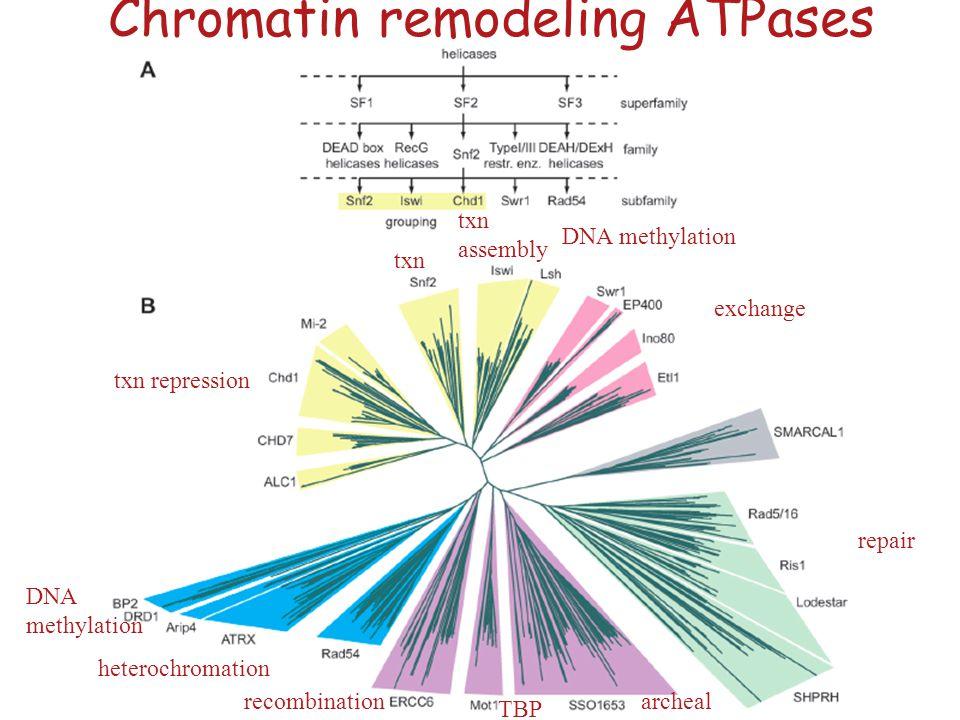 Hauk et al. Molec. Cell 2010 Chromodomains gate CHD1 activity