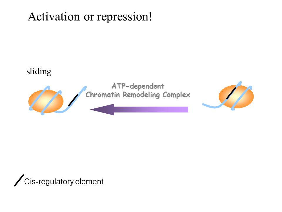 sliding ATP-dependent Chromatin Remodeling Complex Cis-regulatory element Activation or repression!