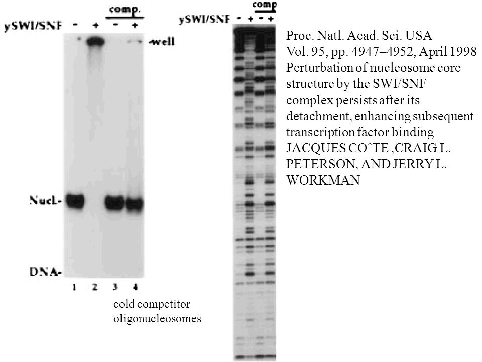 Proc. Natl. Acad. Sci. USA Vol. 95, pp. 4947–4952, April 1998 Perturbation of nucleosome core structure by the SWI/SNF complex persists after its deta