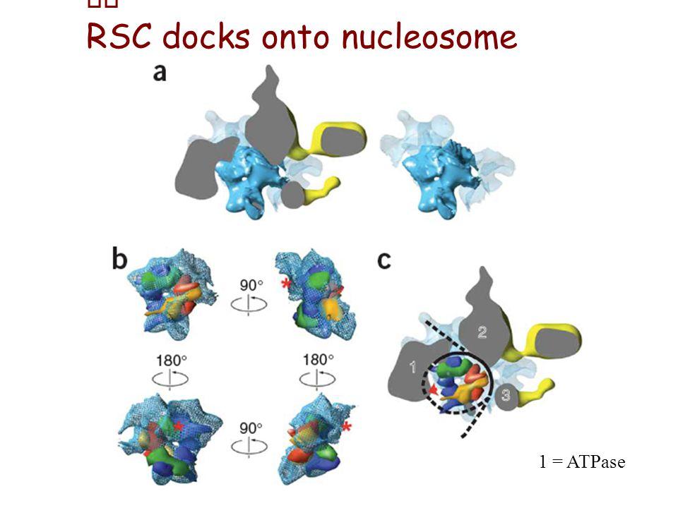 RSC docks onto nucleosome 1 = ATPase