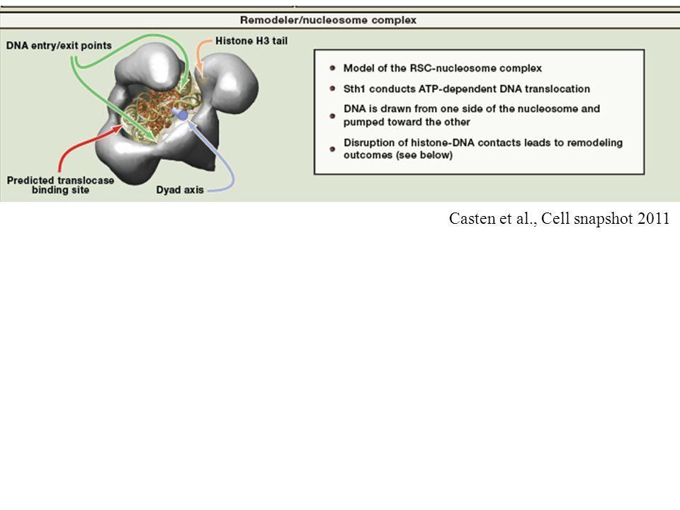 Casten et al., Cell snapshot 2011