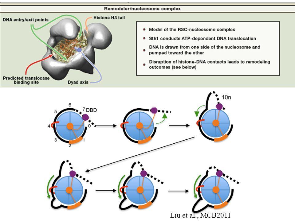 Liu et al., MCB2011