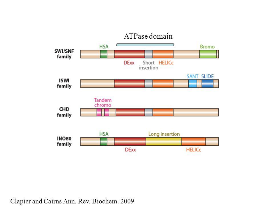 New SnAC domain required for remodeling activity Sen et al., NAR 2011 Hopfner et al. COSB 2012