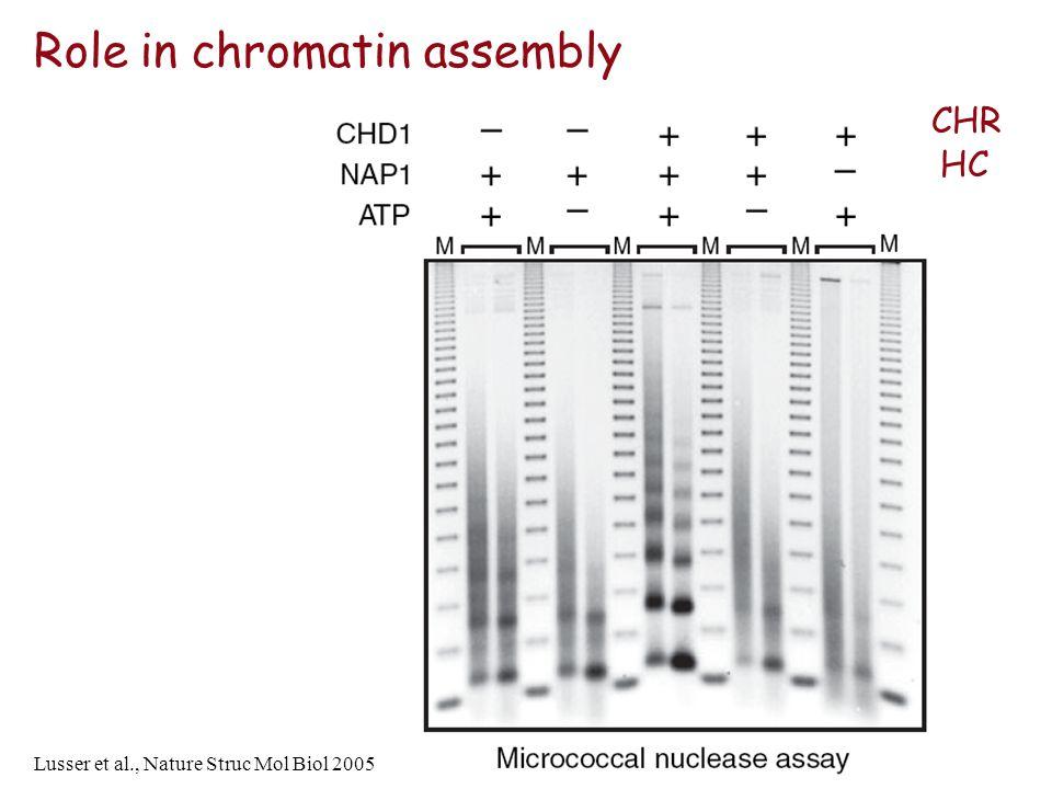 Role in chromatin assembly Lusser et al., Nature Struc Mol Biol 2005 CHR HC