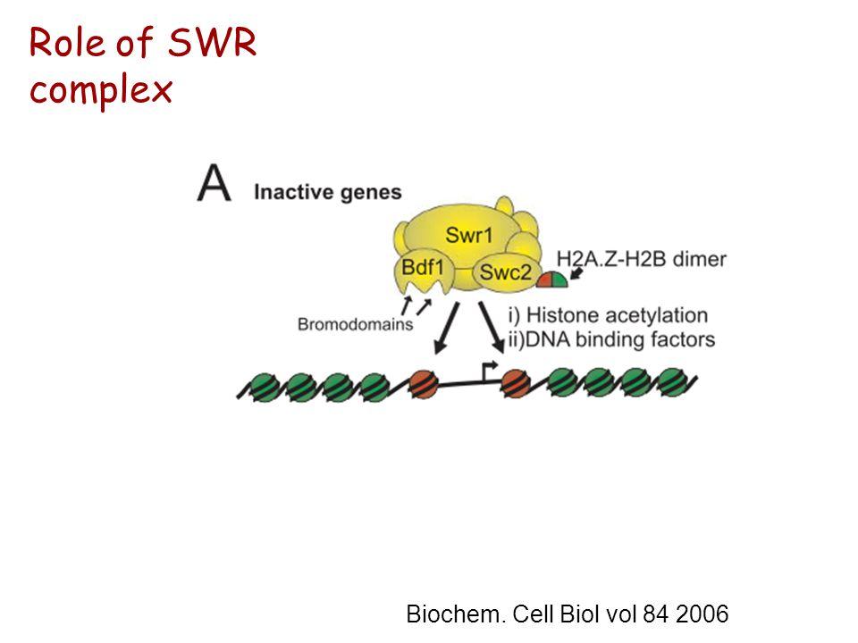 Biochem. Cell Biol vol 84 2006 Role of SWR complex