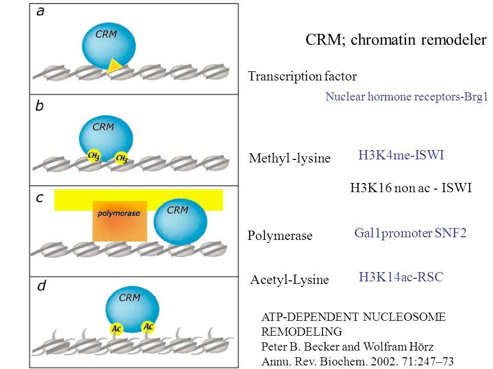 ATP-DEPENDENT NUCLEOSOME REMODELING Peter B. Becker and Wolfram Hörz Annu. Rev. Biochem. 2002. 71:247–73 CRM; chromatin remodeler Transcription factor