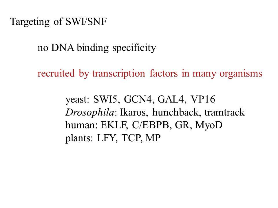 Targeting of SWI/SNF no DNA binding specificity recruited by transcription factors in many organisms yeast: SWI5, GCN4, GAL4, VP16 Drosophila: Ikaros,