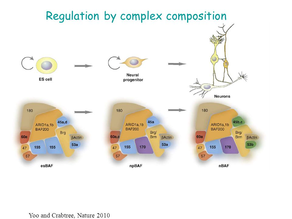 Regulation by complex composition Yoo and Crabtree, Nature 2010