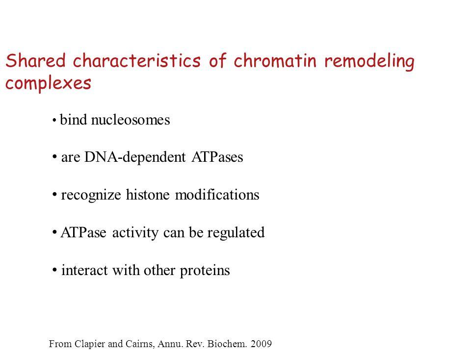 Regulation of SWI2/SNF2 activity 1.