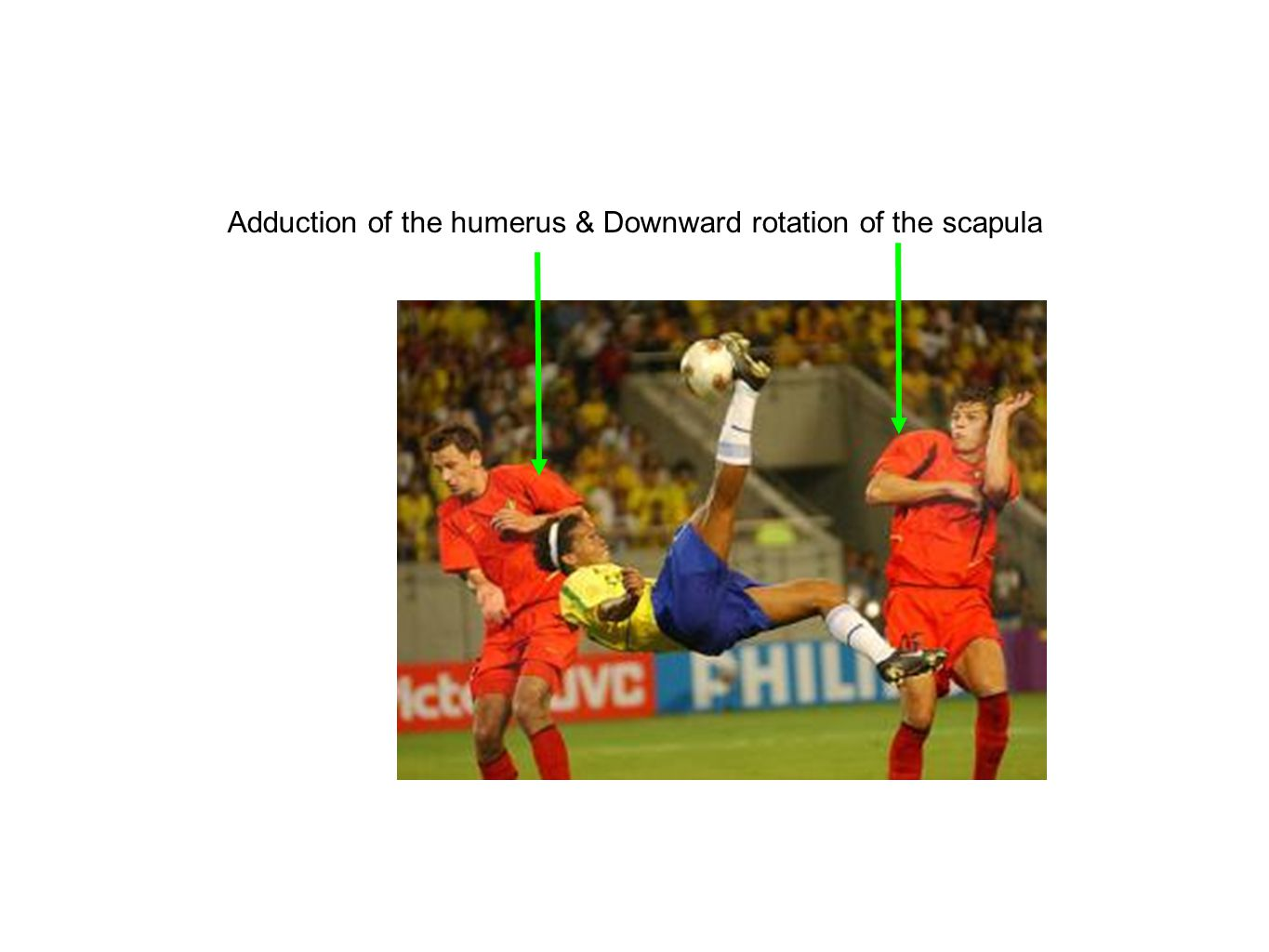 Adduction of the humerus & Downward rotation of the scapula