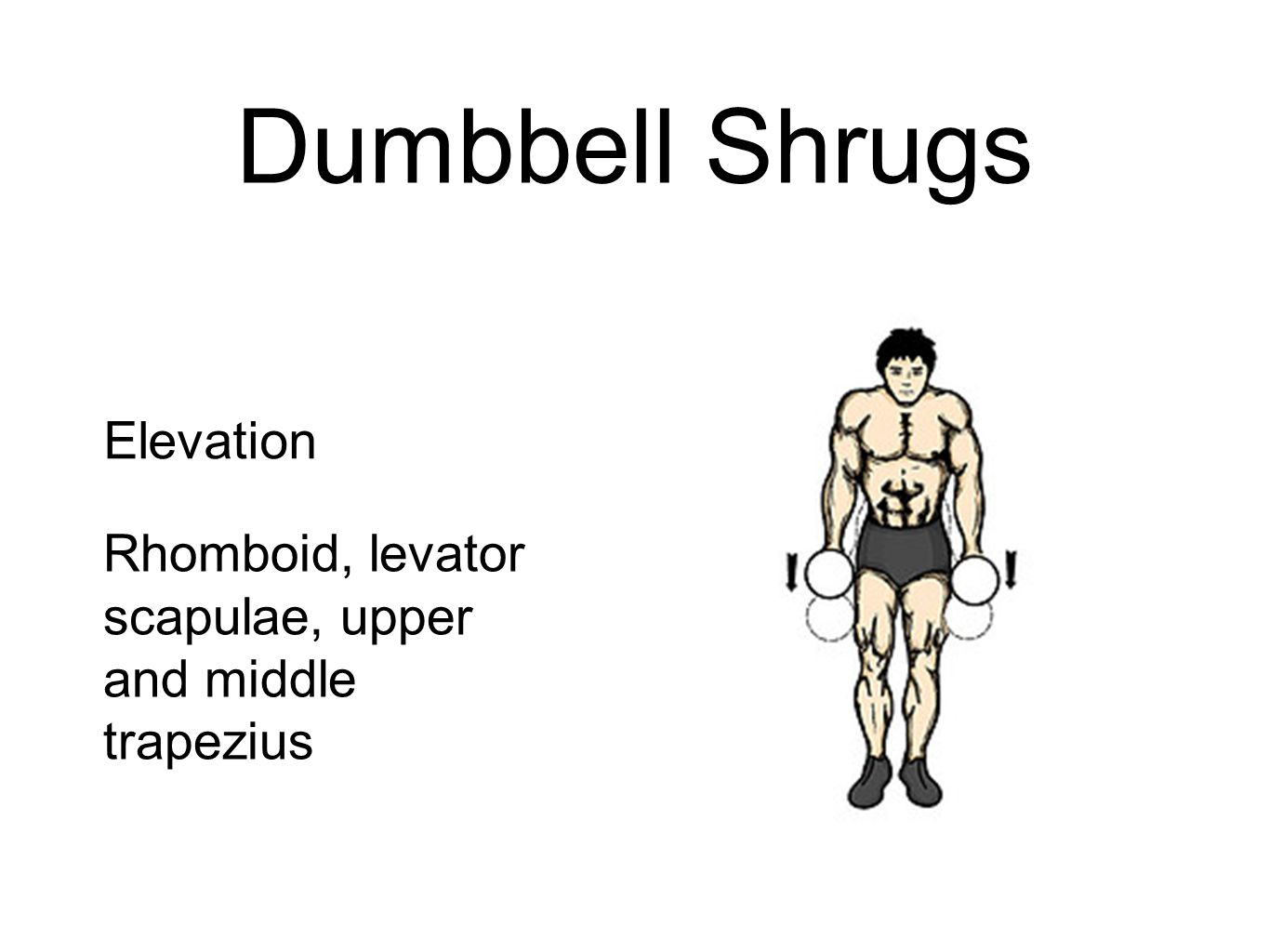 Dumbbell Shrugs Elevation Rhomboid, levator scapulae, upper and middle trapezius