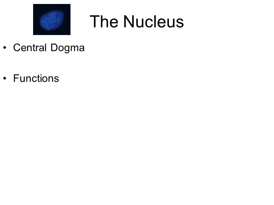 Central dogma: DNA--> RNA--> Protein Nucleus Cytoplasm Proteins are made in cytoplasm-transported to other locations nucleusmitochondriaRough endoplasmic reticulum (ER) Fig 13.1 animation