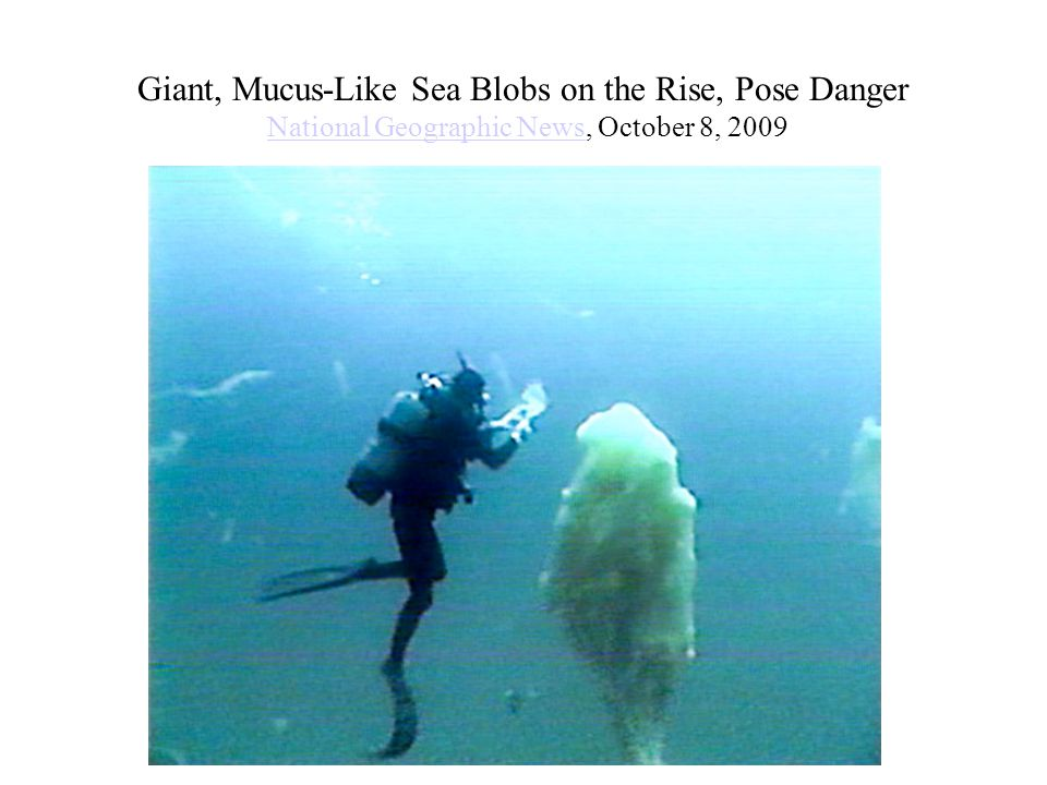 Giant, Mucus-Like Sea Blobs on the Rise, Pose Danger National Geographic News, October 8, 2009National Geographic News