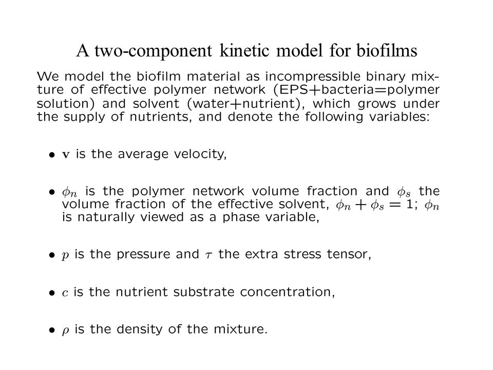 A two-component kinetic model for biofilms