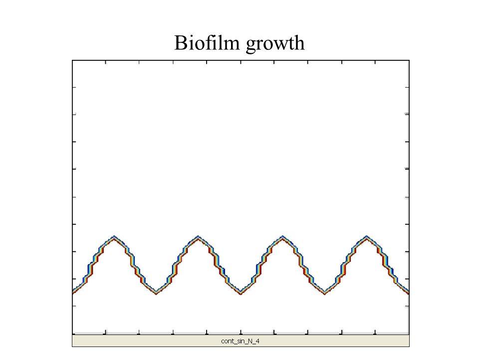 Biofilm growth