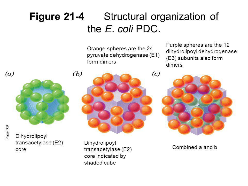 Figure 21-4Structural organization of the E. coli PDC. Page 769 Dihydrolipoyl transacetylase (E2) core Orange spheres are the 24 pyruvate dehydrogenas